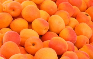 apricots bright as sunshine