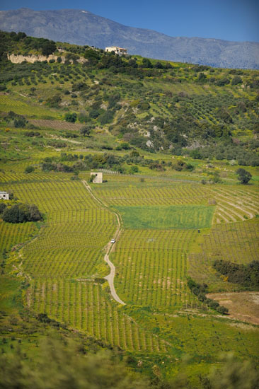 Vineyards of Crete
