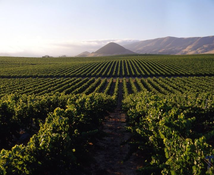 Attica wine country in Koropi