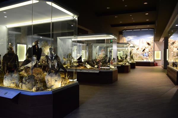 Inside the Natural History & Mushroom Museum in Kalambaka