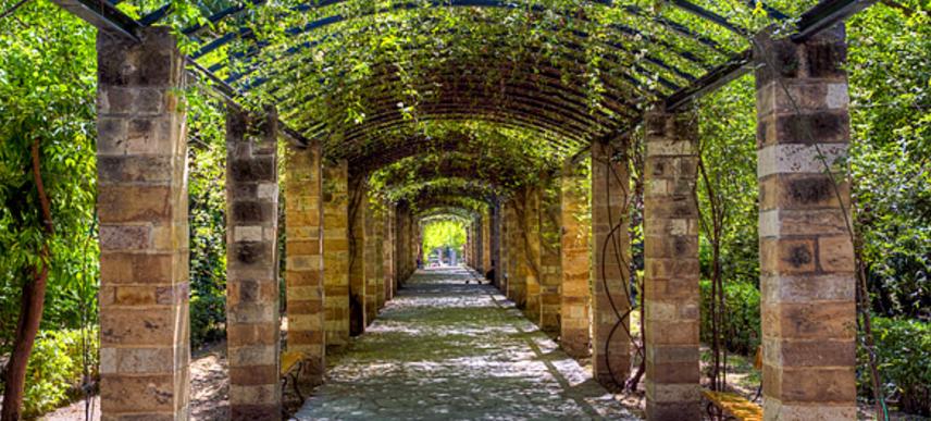 Pergola Rosa Banksiae - National Garden